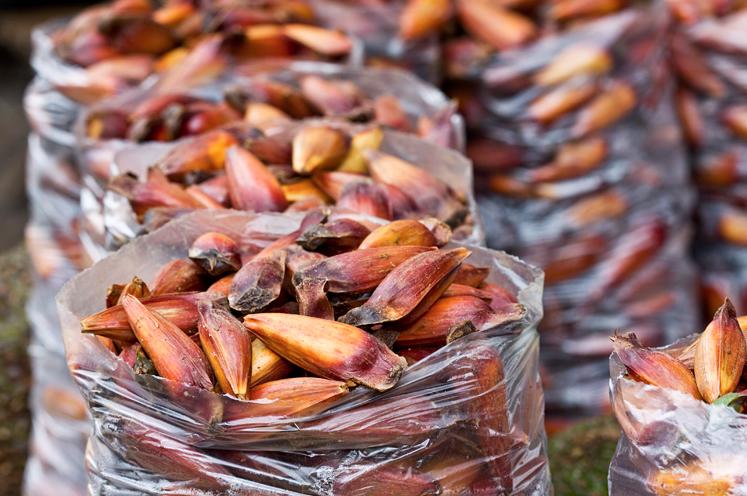 O pinhão e seus benefícios na dieta