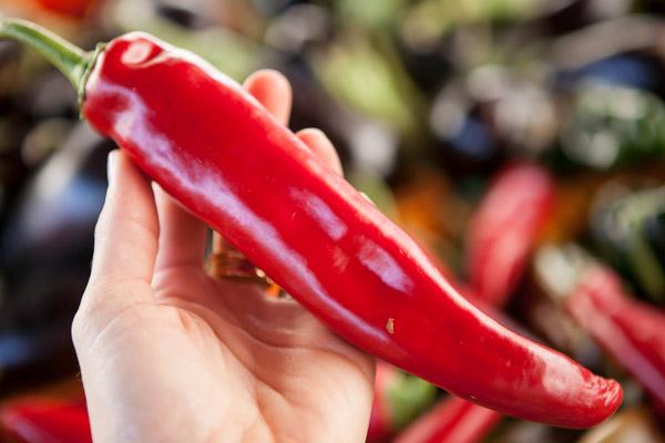 pimenta farmers market san francisco michelle franzoni blog da mimis_-2
