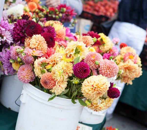 flores farmers market san francisco michelle franzoni blog da mimis_-2