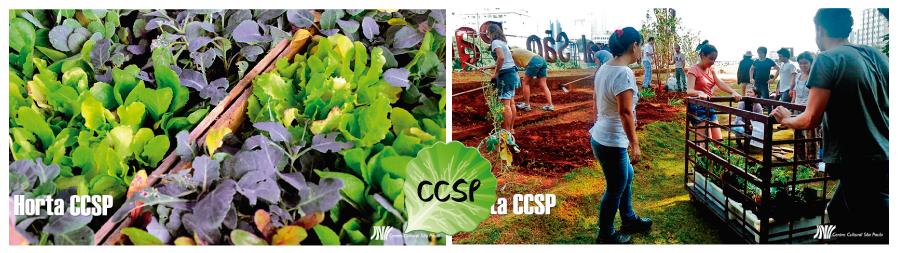 Hortas-Comunitárias-CCSP-blog-da-mimis-michele-franzoni-Jaragua-do-sul