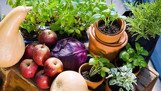 Alimentos convencionais X orgânicos
