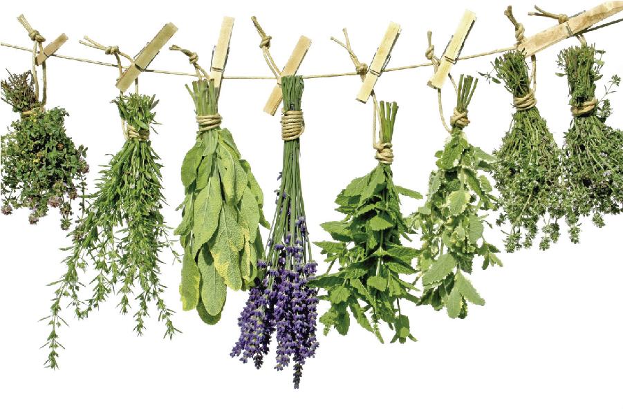 O poder das ervas medicinais