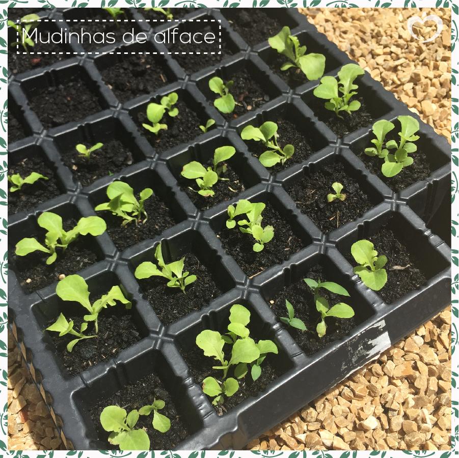 como-plantar-sua-horta-michelle-franzoni-3