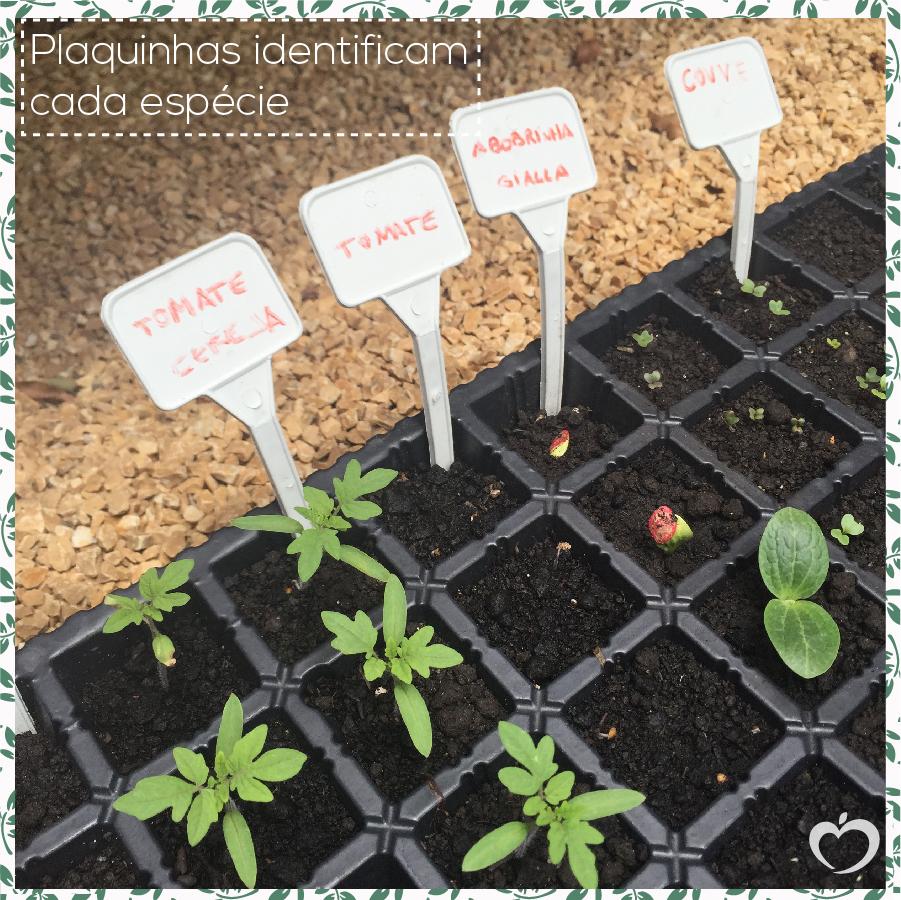 como-plantar-sua-horta-michelle-franzoni-4