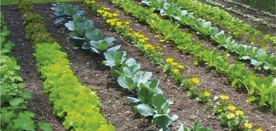 Como plantar sua horta