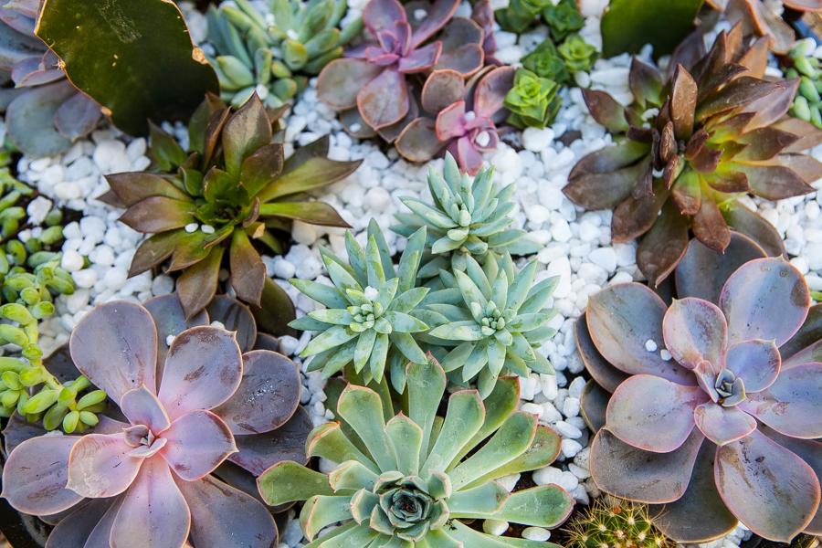 DIY: Mini jardim de suculentas
