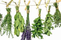 10-Super-Ervas-Aromáticas-blog-da-mimis-michelle-franzoni-destaque