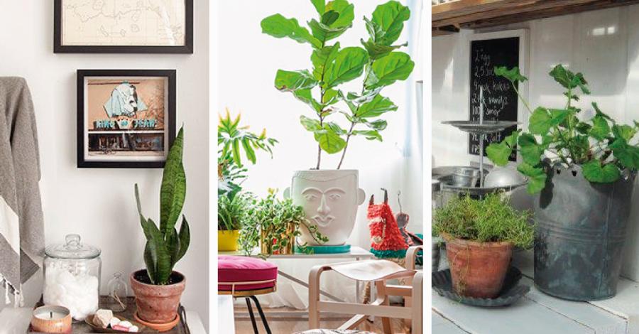 Decorando a casa com plantas