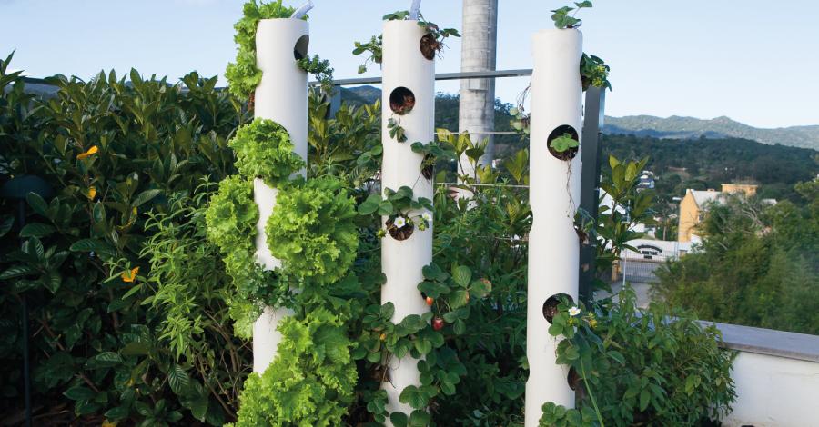 DIY: Como fazer uma horta vertical