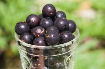 Jabuticaba-a-deliciosa-frutinha-brasileira-blog-da-mimis-michelle-franzoni-destaque