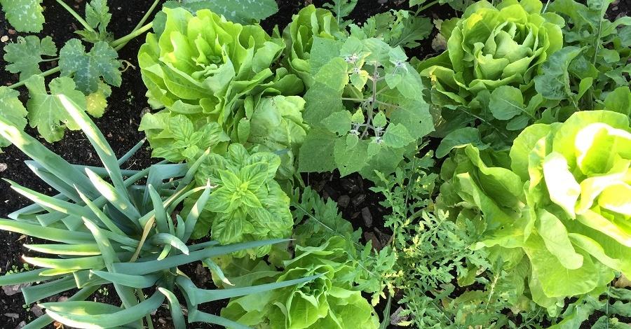 Horta saudável: dicas naturais para combater pragas e insetos