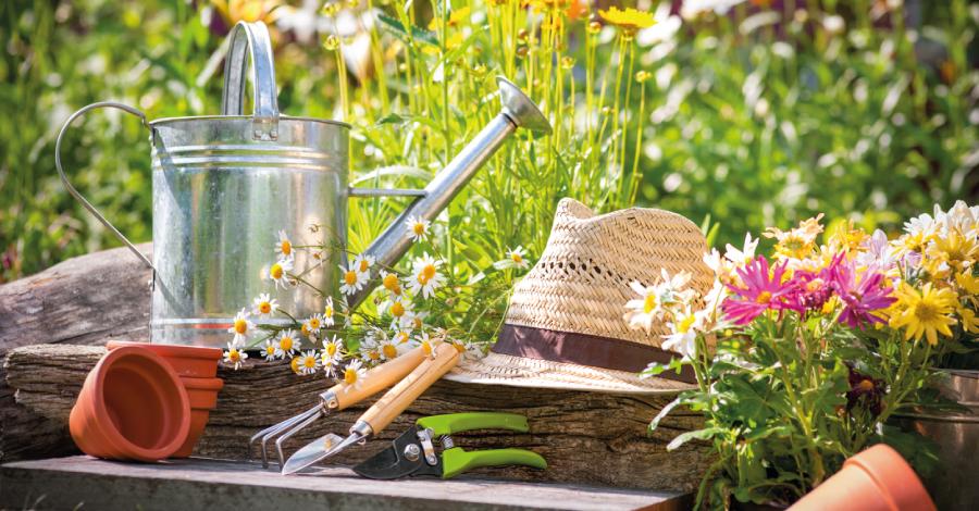 Monte sua horta: inspirações e dicas para o quintal de casa