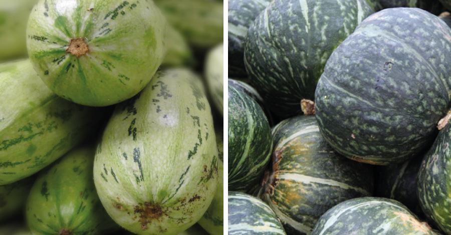 Batalha dos alimentos: abóbora ou abobrinha?