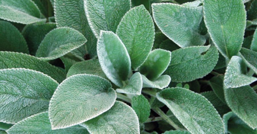 PANC's: 10 plantas que você nunca pensou em comer