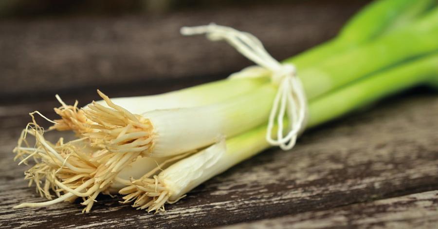 15 Alimentos replantáveis: ideia sustentável e econômica