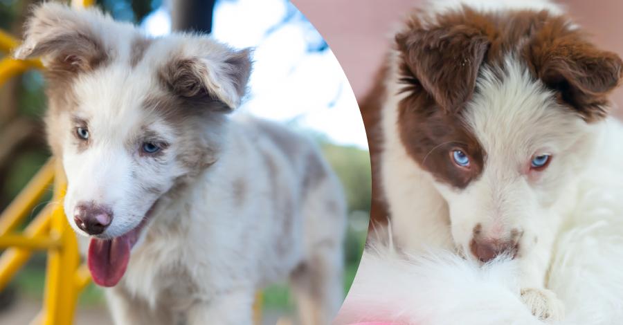 Amor pet: cachorros que mudaram a minha vida