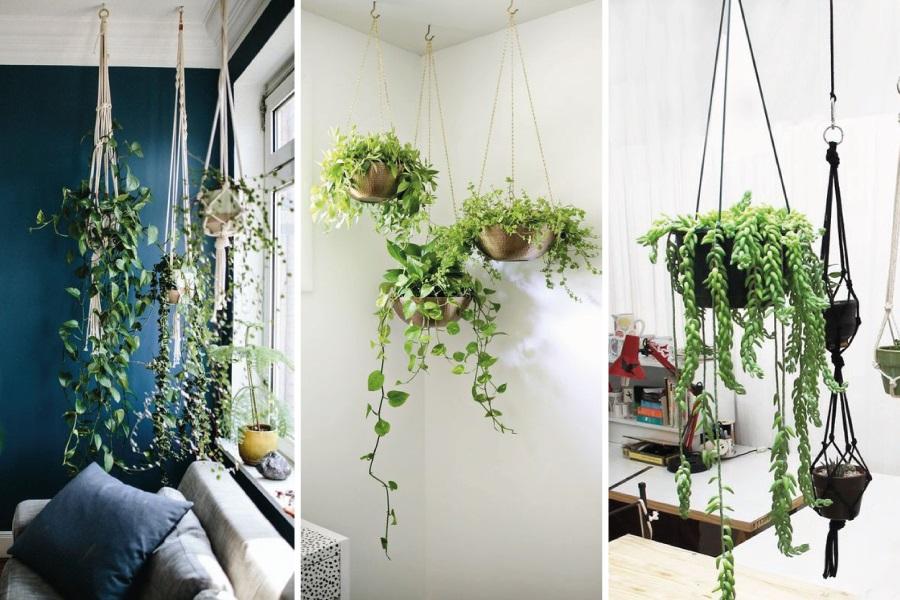 Vasos suspensos: inspirações para dentro de casa