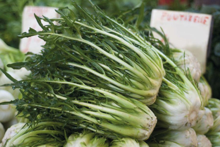 Chicória: benefícios e nutrientes da verdura