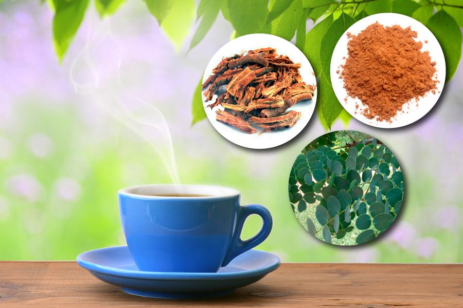 Barbatimão: planta poderosa para curar tudo