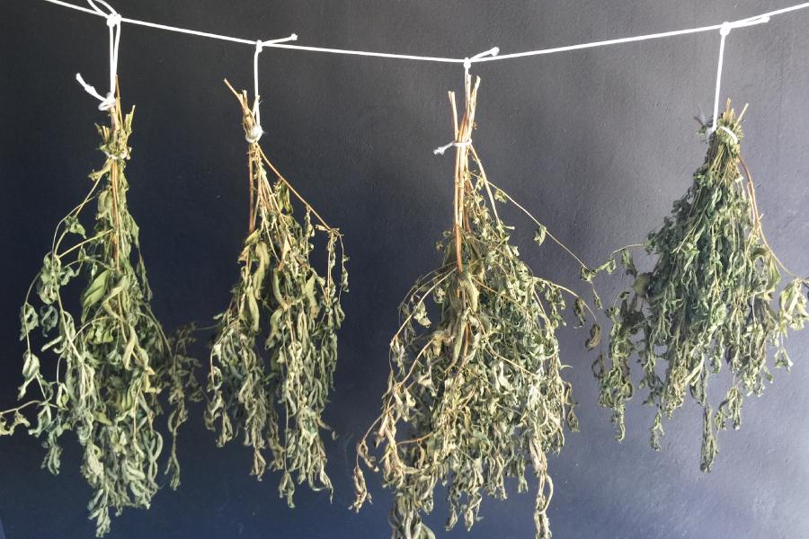 Como fazer tempero de folhas secas