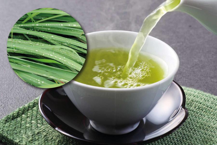 Capim-santo: os benefícios dessa planta para a sua saúde