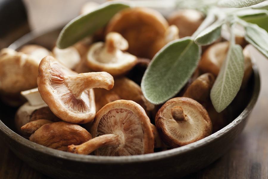 Cogumelos: tipos comestíveis e seus benefícios para saúde
