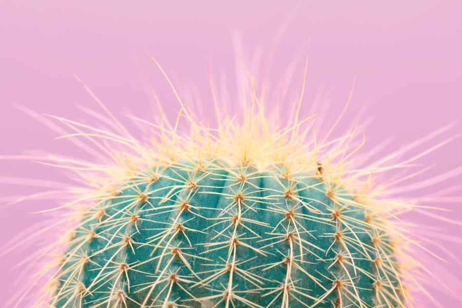 Cactos na decoração: inspirações e dicas de cuidado