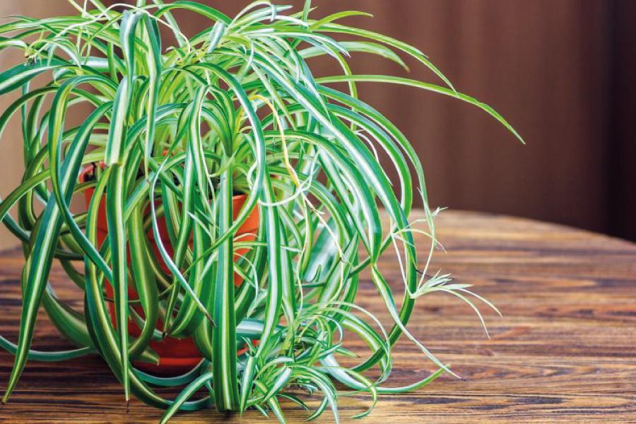 10 Motivos para decorar a casa com plantas
