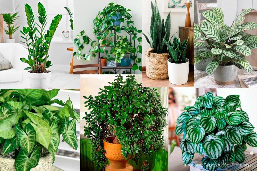 12 Plantas resistentes para cultivar em casa