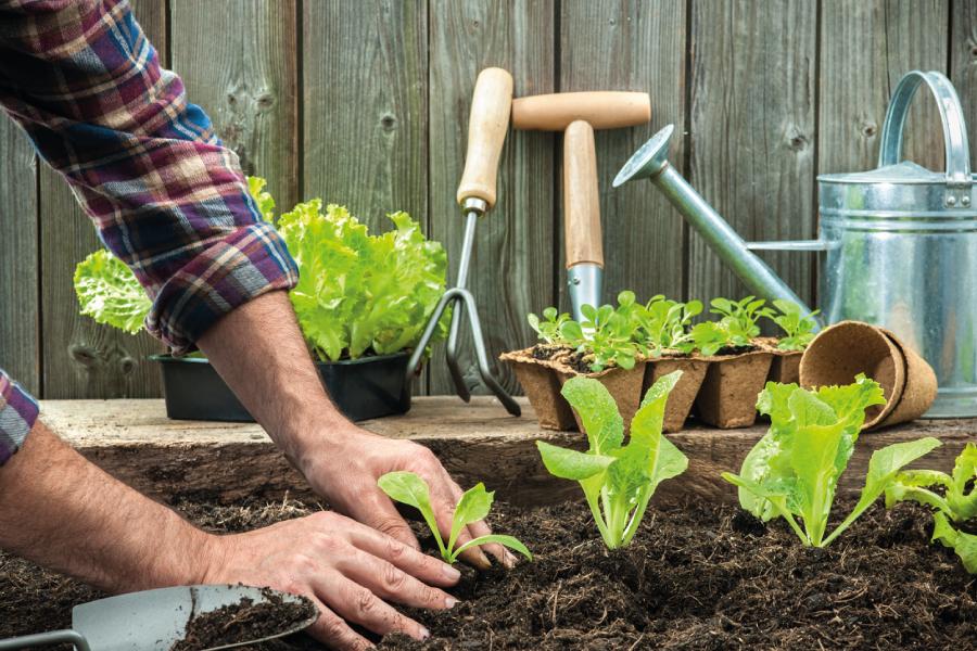 Calendário da horta: o que plantar em cada mês