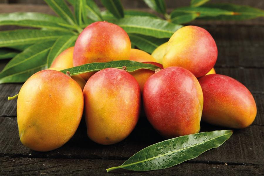 Manga – a fruta amiga do intestino