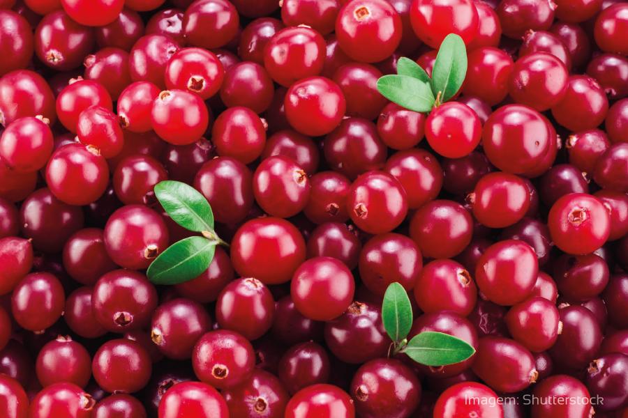 Conheça os benefícios da cranberry